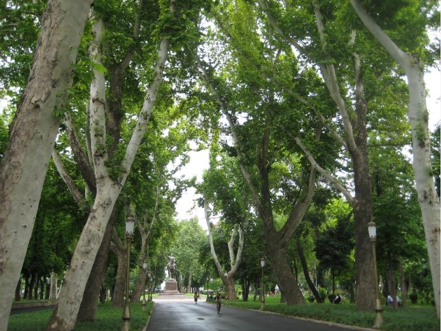 Photo of «Экологически вредные виды деревьев»